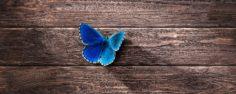 Ktomu, abychom se mohli stát nádherným motýlem, musíme nejdříve projít stádiem nenažrané housenky